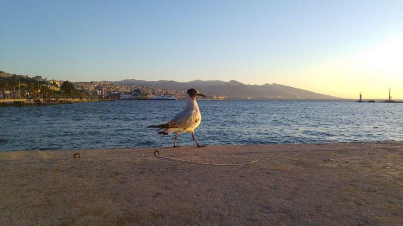 Bird Blue Nature Outdoors Sea And Bird Sea And Sky Sea Bird Seagull Sky Sunset Silhouettes Walking Bird Water LG G4📱 Lgg4photography
