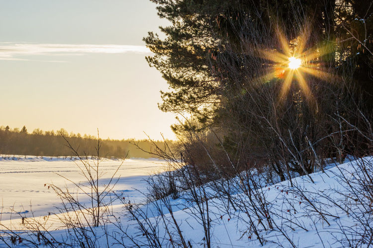 Зима. У реки. Beauty In Nature Cold Temperature Day Landscape Lens Flare Nature No People Outdoors Scenics Sky Snow Sun Sunbeam Sunlight Sunset Tranquil Scene Tranquility Tree Winter