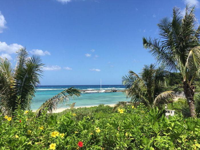 Okinawa Sea Sky Nature Beauty In Nature Horizon Over Water No People Blue Tree Beach Busena Terrace