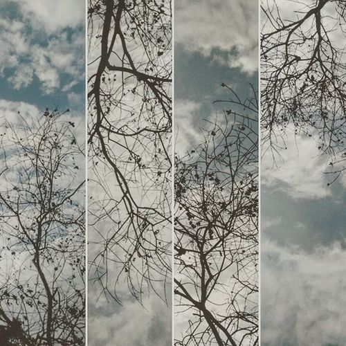 Then I looked up, there I see trees dividing tropical sky into millions of pieces. Pondicherry Tropicalsky Pondichery