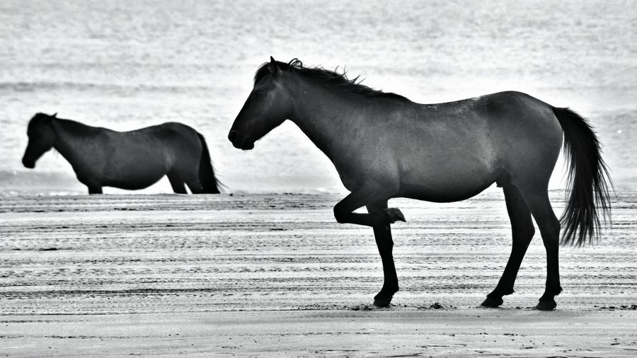 Side View Of Horses At Beach
