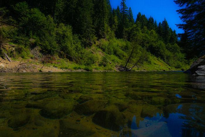 Flections. Nature Clackamas River Oregon Water Trees