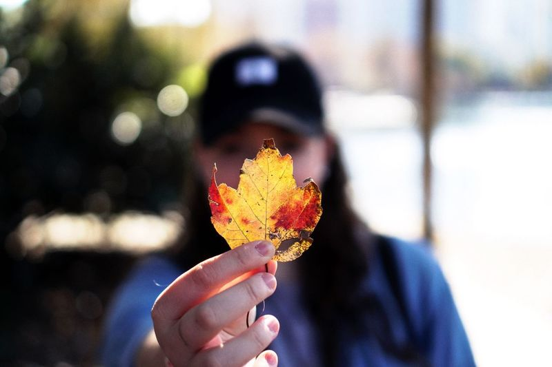 Close-up of woman holding maple leaf