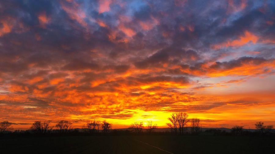 Burning Sky. Pfälzerwald EyeEm Best Shots Sunset Scenics - Nature Sky Beauty In Nature Cloud - Sky Orange Color Tranquil Scene Dramatic Sky Nature Environment Silhouette Landscape