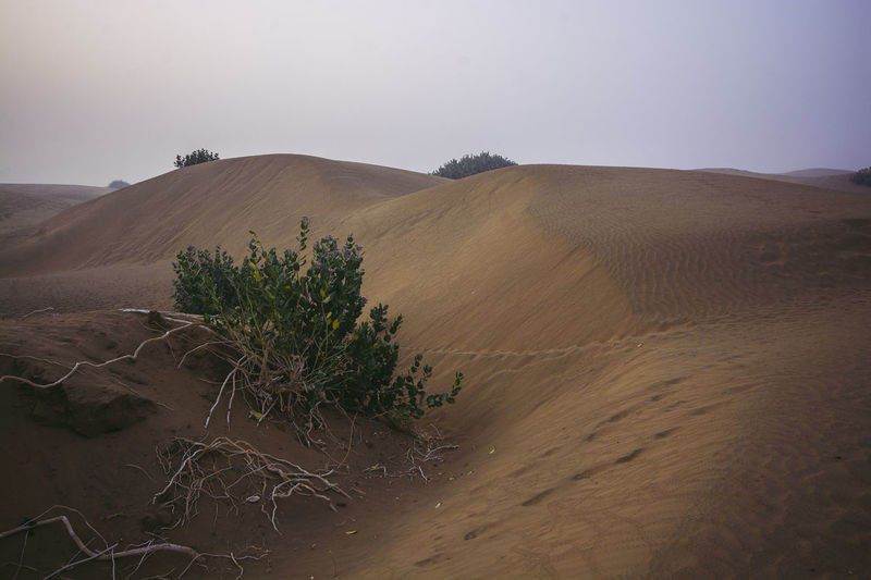 Desert Scenics - Nature Landscape Land Environment Tranquility Sky Tranquil Scene Climate Beauty In Nature Arid Climate Sand Sand Dune Nature Non-urban Scene Remote No People Plant Day Physical Geography Outdoors Thar Desert Jaisalmer