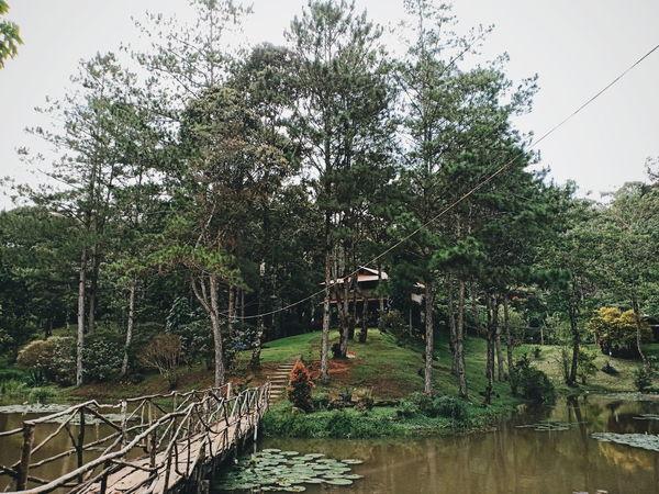 The Week on EyeEm Eyeem Philippines OPPO F7 Phone Photography Tree Water Sky