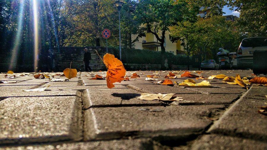 Leaves on tree against sky