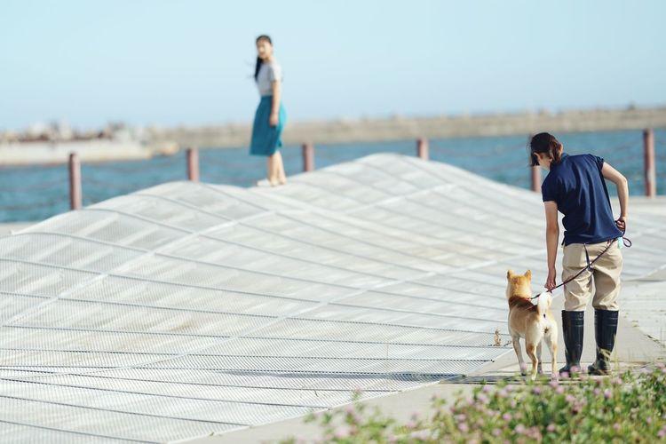 Dog on shore against sky