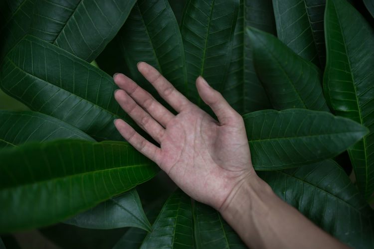 Cropped hand on leaves