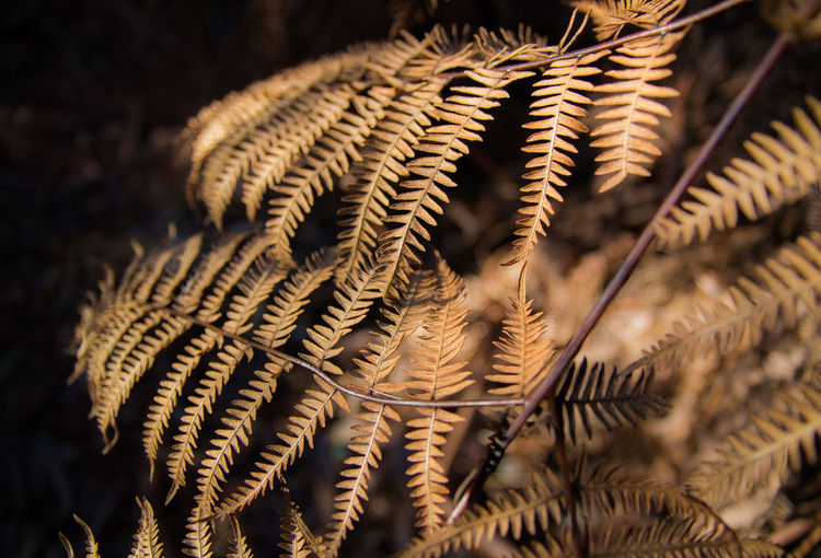 Close-up of fern in winter
