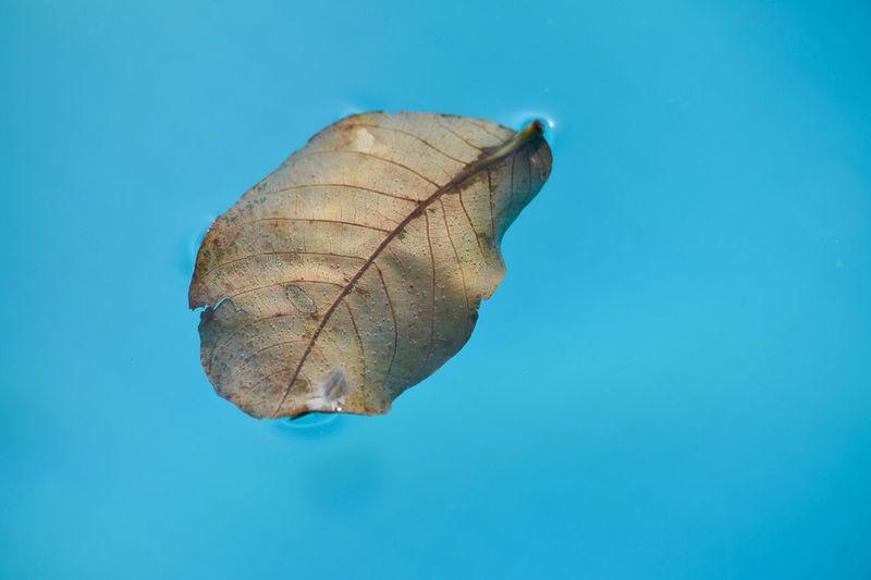 Leaf Blue No