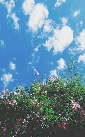 No es justo! adore este filtro y ya subi la foto original a Instagram 😢 Photooftheday Photography FotoDelDia Fotografia Montevideo Uruguay Flower Sky Blossom Close-up Cloud - Sky Plant Life