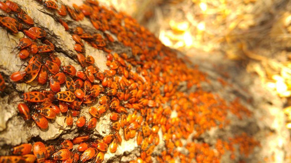 Commune. Nature Red Bugs Autumn Warm