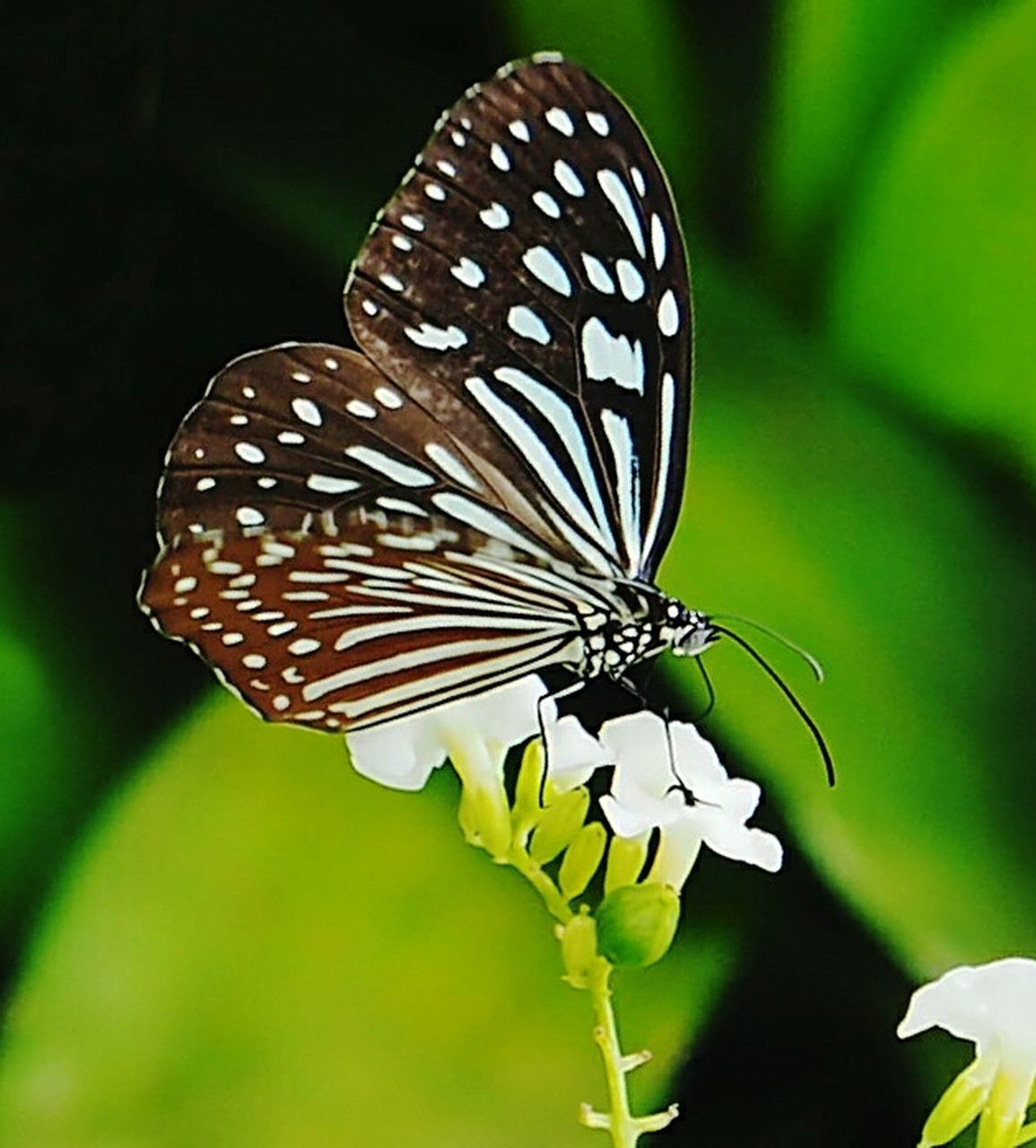 insect, butterfly - insect, animal themes, animals in the wild, one animal, nature, fragility, beauty in nature, animal wildlife, close-up, no people, animal markings, flower, outdoors, focus on foreground, butterfly, plant, growth, freshness, leaf, day, full length, perching, spread wings, flower head