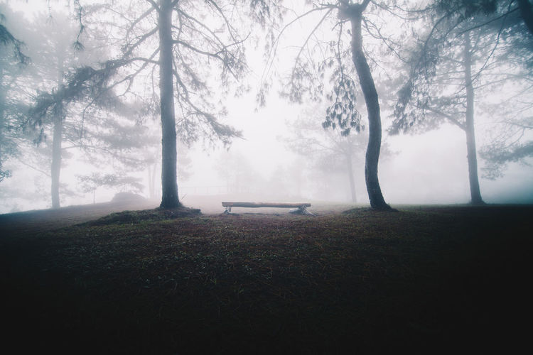 Fog in the pine forest Tree Fog Plant Trunk Land Grass Nature Tranquil Scene Beauty In Nature Scenics - Nature Environment Landscape Day Outdoors Forest Mist Foggy Morning Fantasy Chair Chair In The Woods. Pine Forest Lonely Scare Solitary