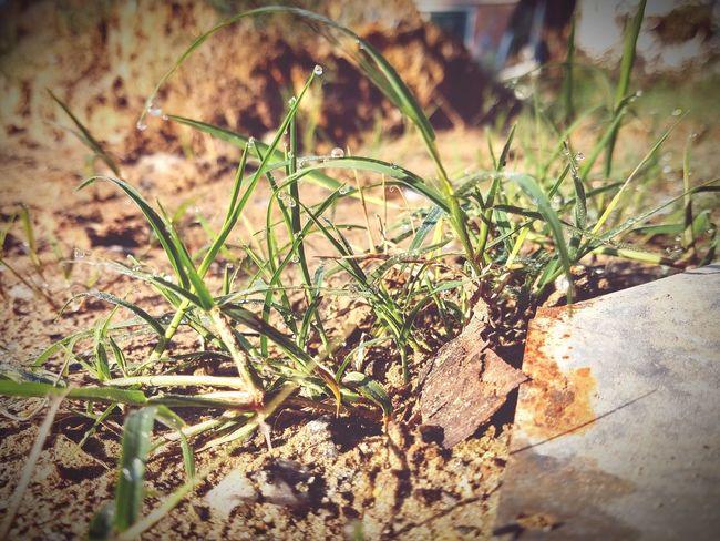 Gota... Close-up Grass Plant Cactus Thorn