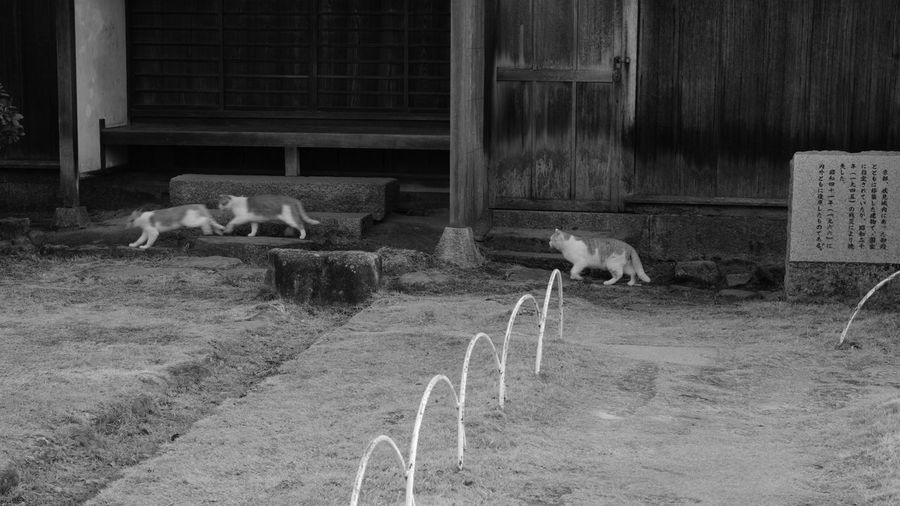 GO! 😼😼🙀 野良猫 Straycats Stray Cats 野良猫ウォッチング Street Cats Running Cats Cat Watching Cat Photography Castle Park Black And White Monochrome Travel Photography