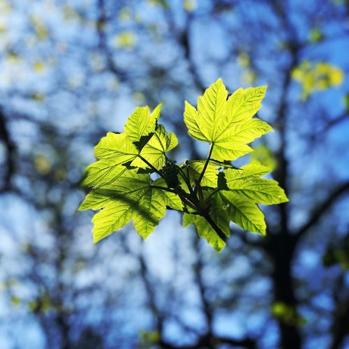 Plant Growth Green Color Plant Part Day Focus On Foreground Beauty In Nature Leaf Nature Close-up Tree Sunlight Low Angle View