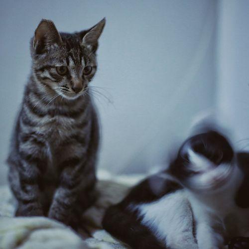 Kitten Sitting At Home