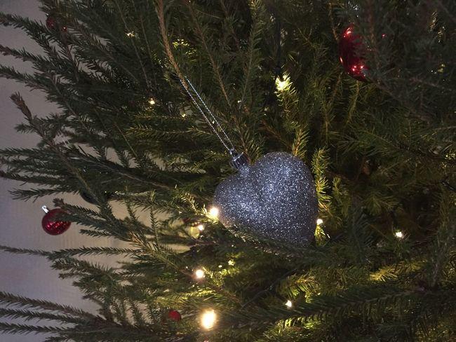 Christmas Christmas Tree Celebration Christmas Decoration Christmas Ornament Tree Tradition