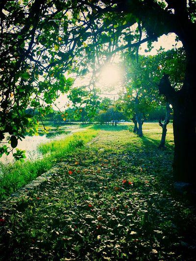 Como eh perfeito nosso mundo 😁😍😌 Nature Photography Greem Nature @biamedeirosz Good Vibes ✌