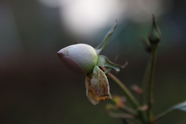 Close-up of buds on plant
