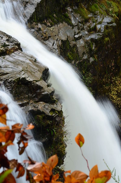 Face in rock at waterfall during fall season Fall Beauty Washington State Beauty In Nature Face In Rock Fall Season Flowing Water Freshness Long Exposure Moss Mt. Baker Nature No People Nooksak Fall Orange Leaves Outdoors Power In Nature Rock - Object Running Water Scenics Water Waterfall