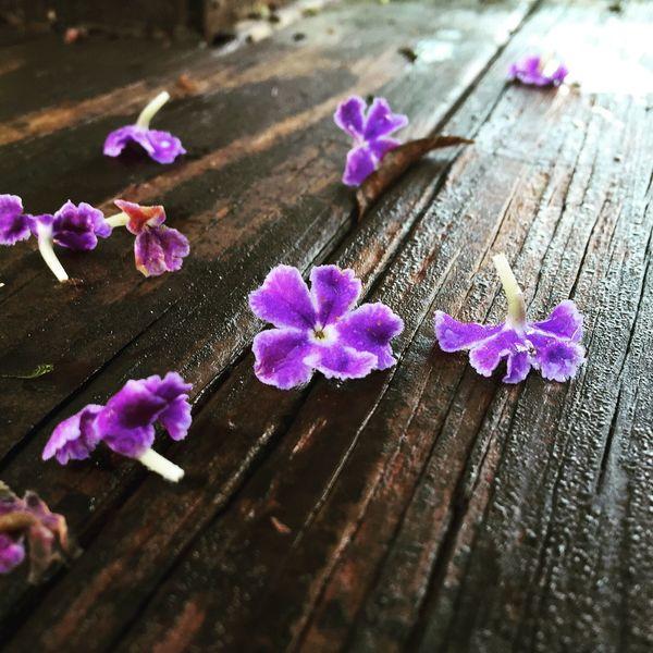 Flowers Flowerporn Wood Floors Morning Taking Photos Loose Leaf Loose Flower