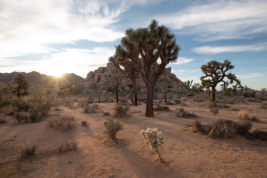 Sundown, Hidden Valley. Sky Plant Tree Cloud - Sky Scenics - Nature Beauty In Nature Tranquility Land Sunlight Desert No People Nature Non-urban Scene Rock Environment Sunset Remote Tranquil Scene Landscape Growth