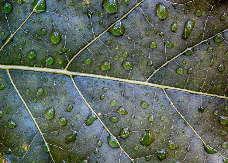 Beauty In Nature Close-up Full Frame Green Color Horizontal Leaf Leaf Vein Nature No People Outdoors