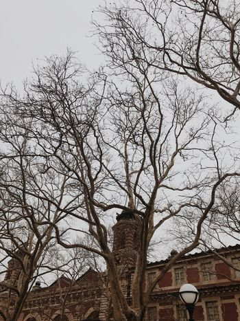 New York Ellis Island  Tree Built Structure Low Angle View Architecture Branch No People Bare Tree Sky Building Exterior Day Outdoors Nature