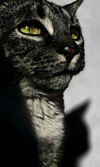 Animal Photography June 2016 Cats Of EyeEm Seriousface Determent