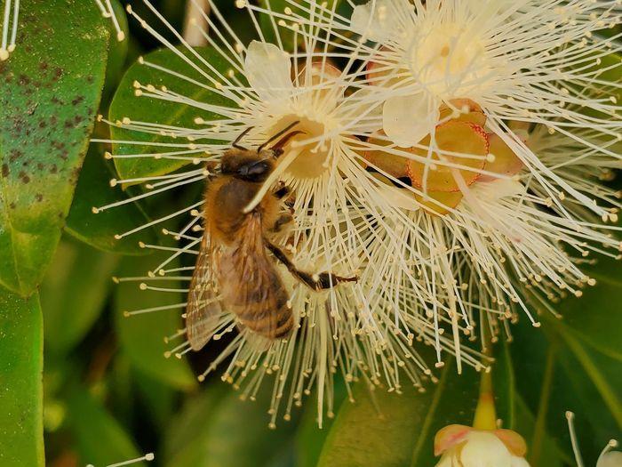 look its a bee