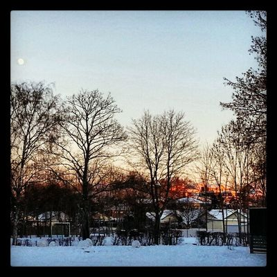 Late afternoon sun Snow Cold Lind ö Trees wintersun winter nature afternoonlight nature houses ninacombat schoolyard