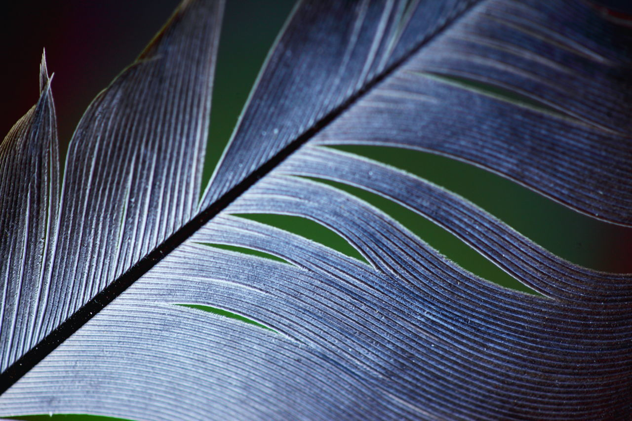 Close-Up,  Day,  Extreme Close-Up,  Feather,  Fragility