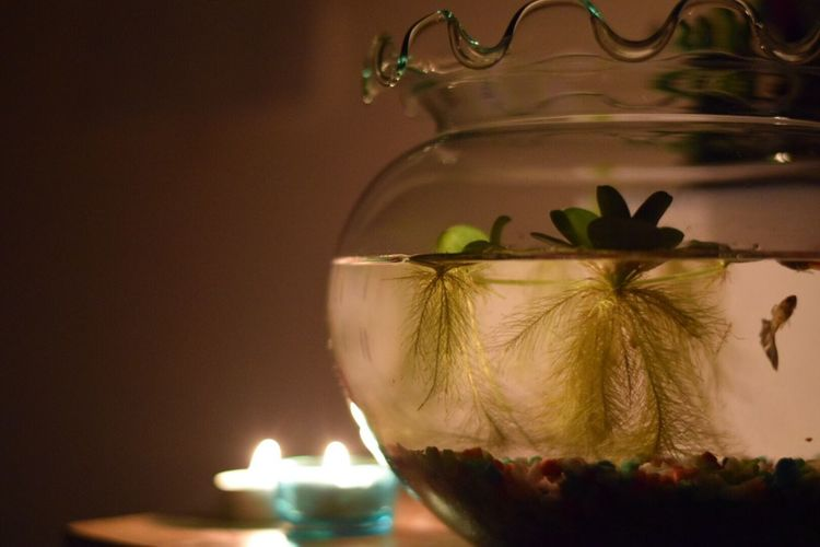 Close-up of fishbowl by illuminated candles on table