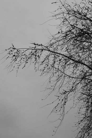 Branch Tranquility Nature Bare Tree Beauty In Nature Tranquil Scene Treetop Non-urban Scene Black And White Photography Fineart Natural Nature Photography Exceptional Photographs Tree Calm Naturelovers Treeart Nature_collection Tranquility Beauty In Nature Fineartphotography