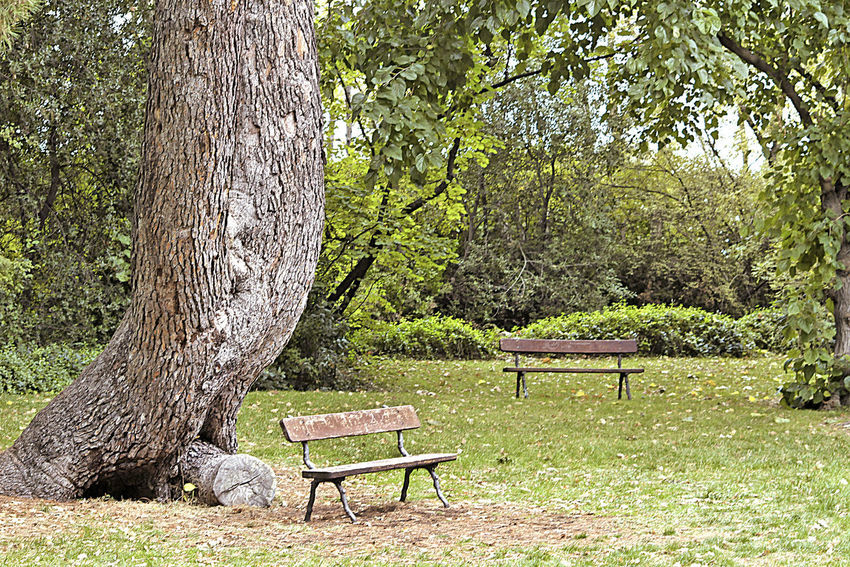capricho park Tree Plant Seat Trunk Bench Tree Trunk Empty Nature Park Green Color Absence Park Bench Park - Man Made Space Land Beauty In Nature Grass Wood - Material Leaves Autumn Autumn colors