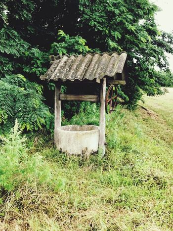 EyeEm Selects No People Plant Day Growth Tree Outdoors Nature Green Color Wood - Material Grass Architecture Make Magic Happen Water Well  Make A Wish Landscape Leftbehind Beautiful Hungary History Outdoor Photography Beauty In Nature Coin EyeEm Selects