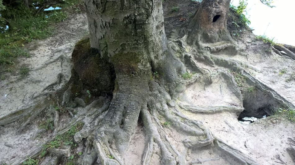 Møns Klint Nature Outdoors Tree Calcium Denmark