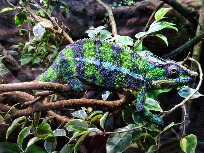 Chameleon Aquarium Fujifilm Close-up Notes From The Underground Nature Green Color Plant Animals In The Wild Animal Wildlife Animal No People Animal Themes