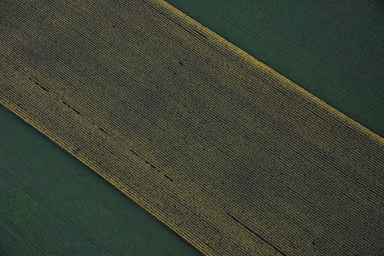 Corn Rows. Full Frame Textured  No People Diagonal Diagonal Lines Colors Corn Corn Field Field Looking Down Areal Arial Shot Broken Patterns Overhead View Rural Scene Backgrounds Country Runridesoar2016 Outdoors Lancaster County Pennsylvania Crops Non-urban Scene Farming Plants Flying High