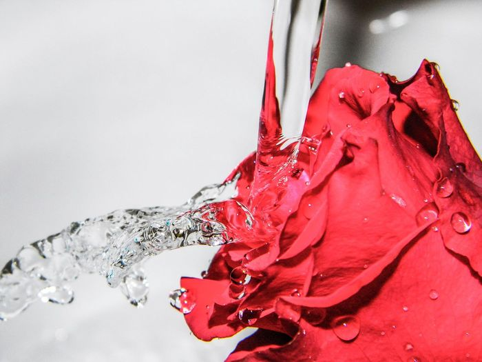Red Rose♥ Close-up Water Love Goodvibes Just Feel It Textured  Drops Of Water Indoors  VSCO Vsocam Vscophile Abstract Beautiful Artistic Photography Amateur Photography EyeEmNewHere Art Is Everywhere