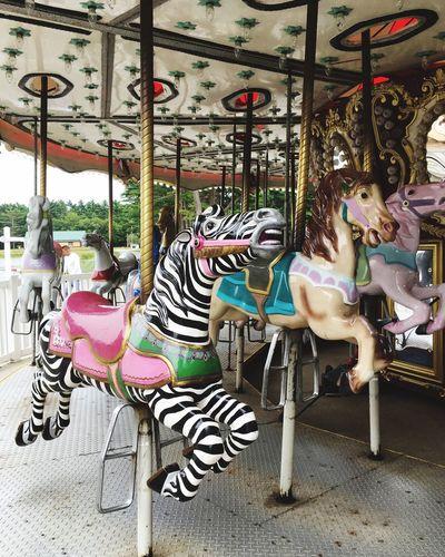 Zebra Amusement
