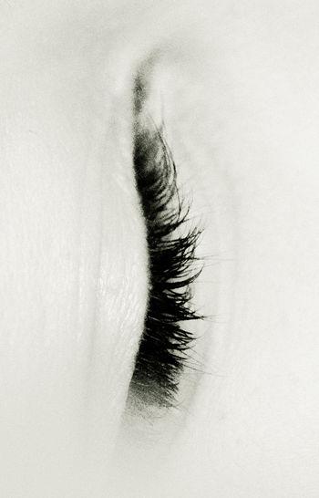 Close-up Detail Extreme Close-up Eye Eyelashes Human Skin Lashes Lid Lid Of The Eye Selective Focus White White Background The Portraitist - 2016 EyeEm Awards