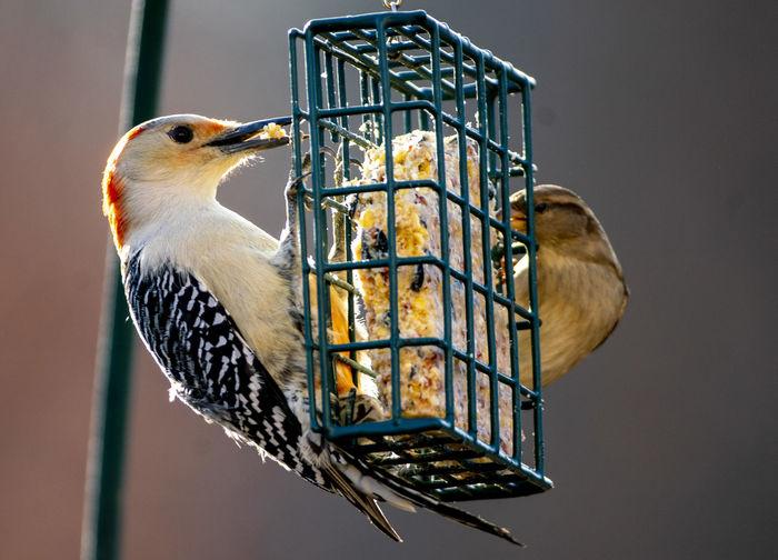 Two feeding