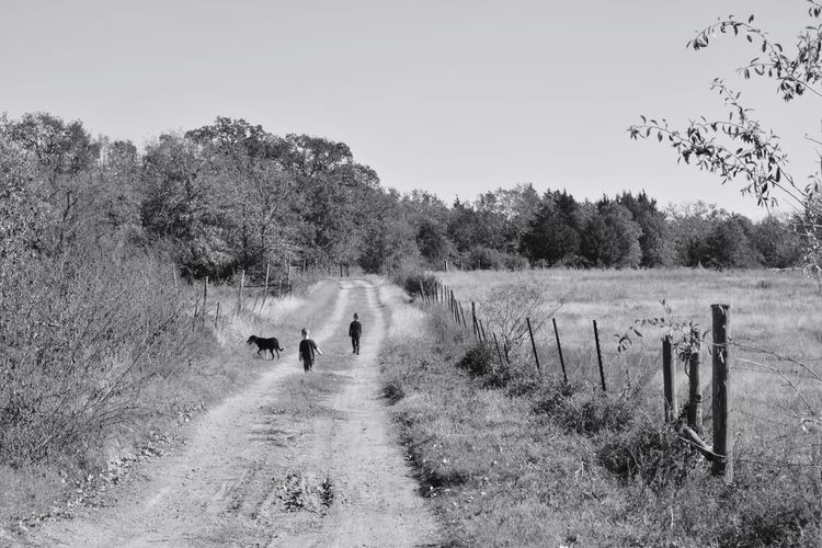 Grandsons and dog walking down a farm dirt road Dog Dirt Country Road Farm Black Amd White Animal Themes Landscape Tree Outdoors Mammal Grass Crafted Beauty Nature Rural Scene Scenics Beauty In Nature Crafted Beauty