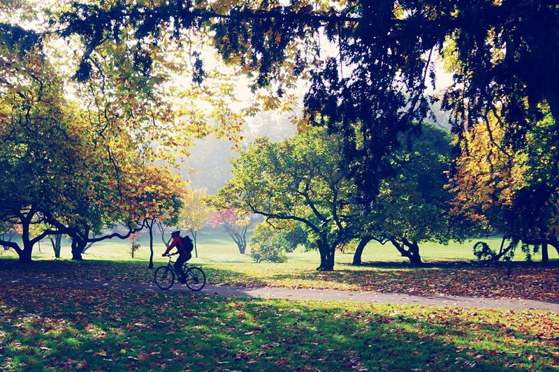 Bute Park Wales Cardiff Tree Nature Bicycle Leaf Autumn Beauty In Nature Outdoors Adults Only Healthy Lifestyle Adult People Cycling Growth Full Length Women Day Men Scenics Togetherness Young Adult