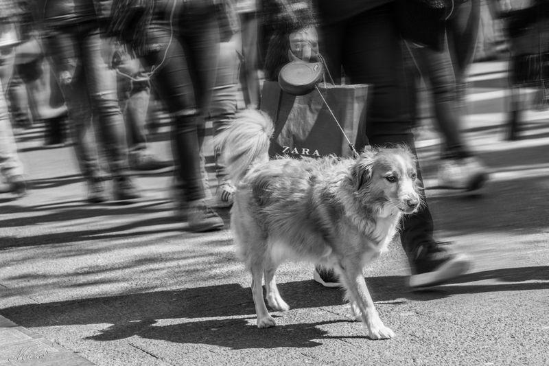 Blackandwhite Day Dog Walking Lifestyles Motion Outdoors Pets Road The Photojournalist - 20I6 EyeEm Awards