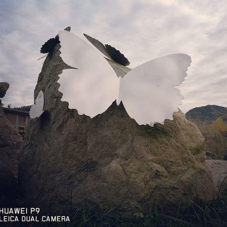 Butterfly Sempreingiro Parcofluviale SantaSofia